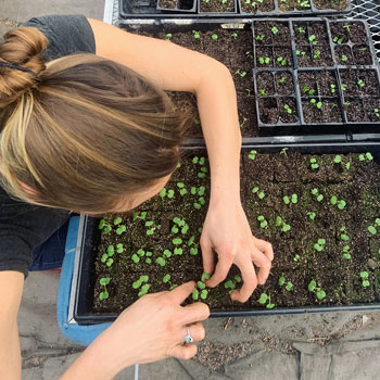 Jamie tending to seedlings